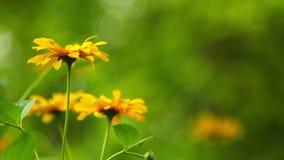 Summer flowers blooming stock video
