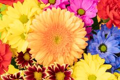 Summer flowers bouquet Royalty Free Stock Photos