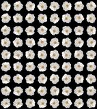 Summer flowers bouquet, cosmos flowers. Print. White and yellow soft flower buds on white background, natural pattern royalty free stock photo