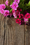 Summer flowers on brown wooden background Stock Images