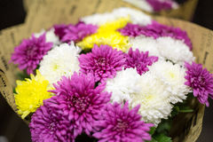 Summer flowers. A bunch of summer flowers Royalty Free Stock Images