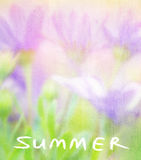 Summer flowers card Royalty Free Stock Photography