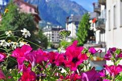 Summer flowers in Chamonix Stock Photo
