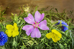 Summer flowers on cleaver herb Stock Image