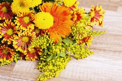 Summer flowers, close-up Royalty Free Stock Photo