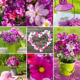 Summer flowers collage Royalty Free Stock Images