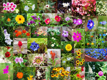 Summer flowers Stock Photos