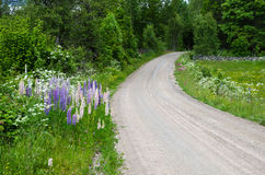 Summer flowers by a country road Royalty Free Stock Images
