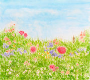 Summer Flowers on Daylight Meadow, Watercolor Hand Painted. Summer Flowers on Daylight Meadow, Watercolor Hand Drawn and Painted Royalty Free Stock Photos