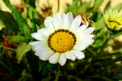 Summer Flowers. Early summer Flowers, Short depth-of-field Royalty Free Stock Image