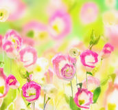 Summer flowers field, nature background Royalty Free Stock Photography