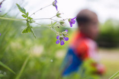 Summer flowers. Flower with children in blurry background Royalty Free Stock Image