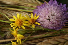 Summer flowers or Flower in summer time.  Stock Photos