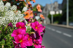Summer flowers in the French town Royalty Free Stock Image