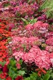 Summer flowers in full bloom Stock Photos