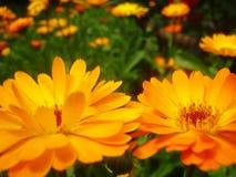 Summer flowers. In the garden Stock Photos