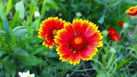 Summer flowers in the garden stock video