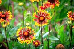 Summer flowers in garden Stock Images