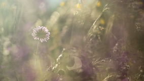 Summer flowers and grass in the wild