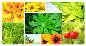 Summer flowers, green leaves and butterfly Royalty Free Stock Image