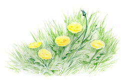 Summer flowers. Hand drawn illustration with yellow flowers in green grass Royalty Free Stock Photo