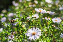 Summer flowers with insects Royalty Free Stock Image