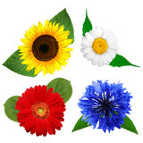 Summer flowers isolated on white background Stock Photography