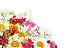 Summer flowers isolated on white background Royalty Free Stock Photography