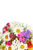Summer flowers isolated on white background Stock Images