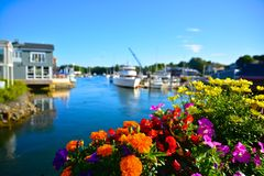 Summer flowers in Kennebunkport, Maine. Radiant flowers in bloom alongside the bridge in Kennebunkport, Maine Royalty Free Stock Images