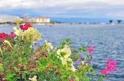Summer flowers and lake Leman, Geneva Stock Image