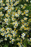 Summer flowers. Little summer flowers on field Stock Image