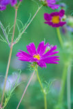 Summer flowers on meadow Stock Image