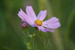 Summer flowers on meadow Royalty Free Stock Photo