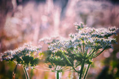 Summer flowers on the meadow against colorful background, fresh nature concept, soft focus, warm pastel tones Stock Photos