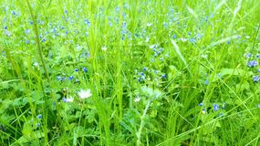 Summer flowers on the meadow royalty free stock photo