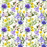 Summer flowers, meadow grasses, spring herbs. Seamless natural background. Watercolor in blue color stock illustration