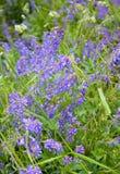Summer flowers. Medicago Stock Images