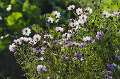 Summer flowers in morning sunlight Royalty Free Stock Images