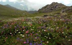 Summer Flowers. Motley grass mountain meadow lush greenery pasture pastureland Stock Photo