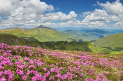 Summer flowers in the mountains Stock Images