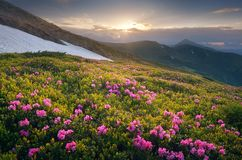 Summer flowers in the mountains at sunset Stock Photography
