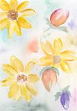 Summer flowers. Original Watercolour illustration of different colourful summer flowers Stock Photo