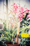 Summer flowers plant for garden with gardening tools, Fern and flowers seedling with shovel Royalty Free Stock Photos