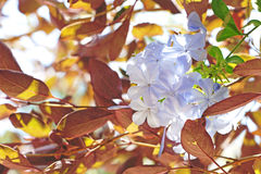 Summer flowers Royalty Free Stock Image