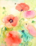 Summer Flowers Red Poppies and Bumble Bees Watercolor Illustration Hand Painted. Hand painted Watercolor illustration of Red Poppies and Bumble Bees Royalty Free Stock Photo