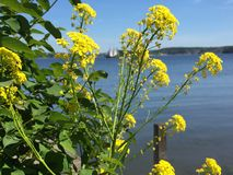 Summer. Flowers and sea with ships in Stockholm sweden Stock Image