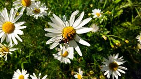 Summer flowers with something extra. Summer flowers with bugs and insects Stock Photography