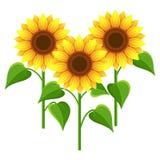 Summer flowers sunflowers over white Stock Photos