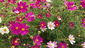 Summer flowers swaying in the wind stock footage